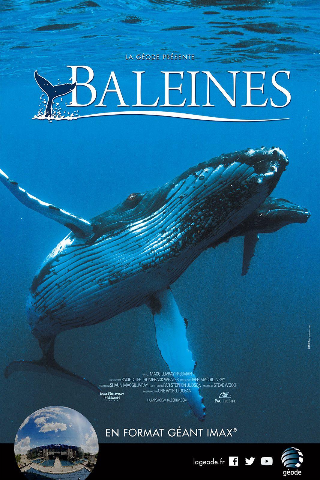 Baleines - Documentaire (2015)