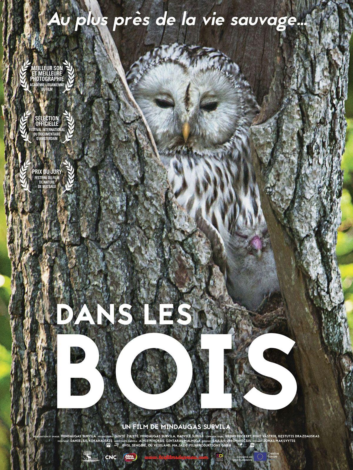 Dans les bois - Documentaire (2019)