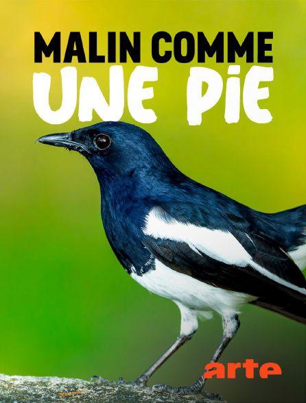 Malin comme une pie - Documentaire (2021)