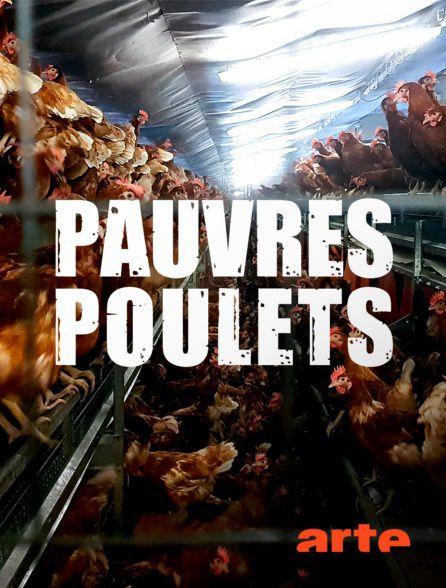 Pauvres poulets - Une géopolitique de l'oeuf - Documentaire (2019)