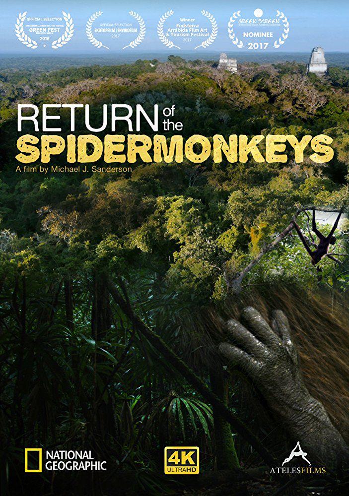 Saving Infinity: Return of the Spider Monkeys - Documentaire (2016)