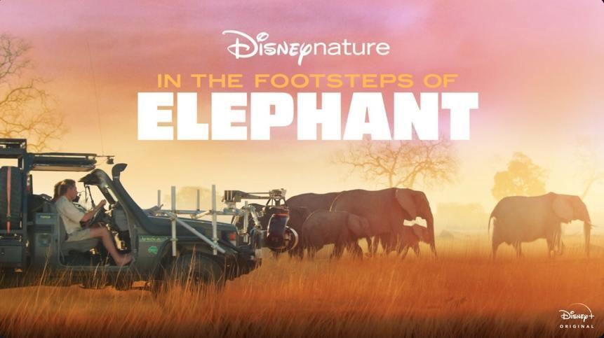 Sur la route des éléphants - Documentaire (2020)