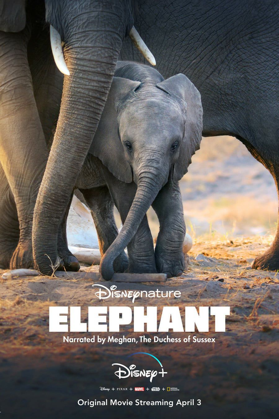 Éléphants - Documentaire (2020)